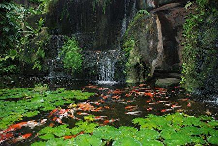鯉魚池。(大紀元資料庫)