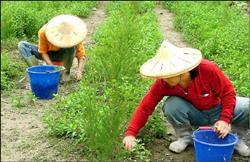 加利利種香草 創造產業春天