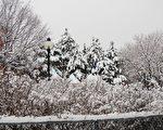 组图:暖雪覆盖冬季的蒙特利尔