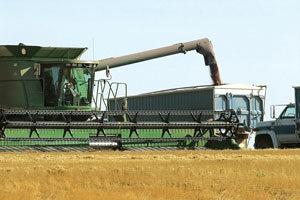 多国禁止粮食出口 港媒:大陆粮食不够用