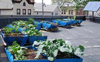 屋頂上的菜園 (上)