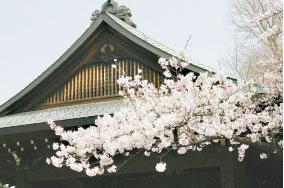 小說:櫻花開的時節