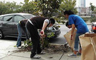 华埠清扫社区  希望清洁持续