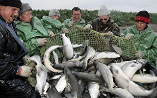 阿拉斯加海水酸化快  恐影响渔业资源