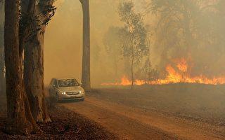42.5度高温 澳纽省发最高火情警报