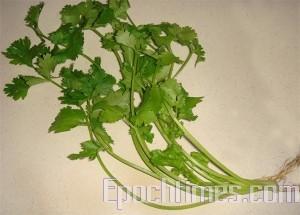 調味用的香菜含有精油可去腥醒脾(圖:林秀霞/大紀元)