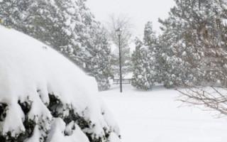 组图: 大风雪覆盖下的维吉尼亚州