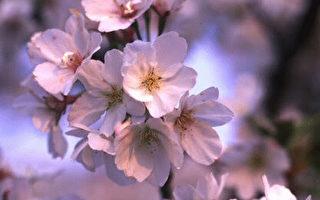 花枝花芽花心 妙名满花园
