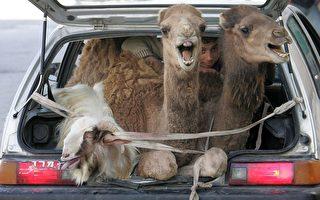 组图:法新社2009年动物奇趣图片