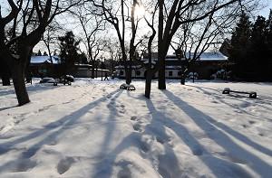 唐浩:悲雪