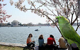 【移民感怀】郑箫:美国呆鸟与和谐社会