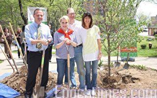 """""""植树百万""""绿化纽约 布碌崙再添70棵"""