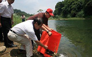 野放鱼苗 保护台湾原生鱼