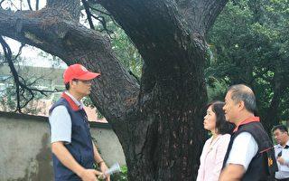 種樹者的不捨   喚起搶救老樹行動