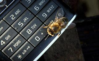 研究证明蜜蜂数量减少和手机有关