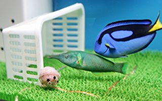 鱼类认知力比预期强 害怕自身倒影