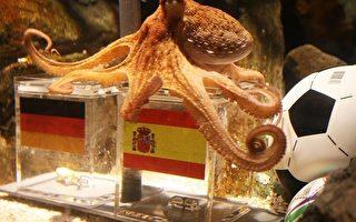 世界杯足赛神算 章鱼哥赛后话题延烧