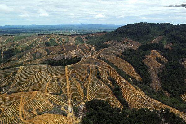 組圖:地球肺葉萎縮中 婆羅洲熱帶雨林
