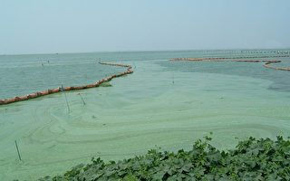 太湖告急 王维洛揭洪水形成的背后原因