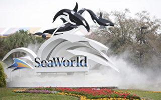 鲸杀人 美国海洋世界罚7万多美元
