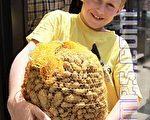山區小孩挖土豆賺零錢的故事