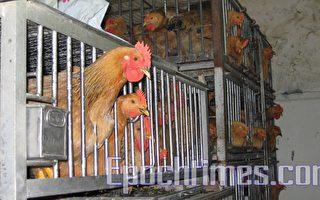 动物瘟疫究竟预示了什么?