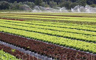 法国农业走向绿色化