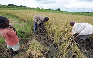 中國缺水致糧食減產  到非洲租地