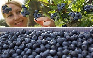 蓝莓有益健康的九大功效