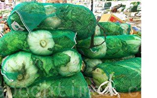 韓國預計12月後白菜價格將低於往年