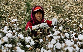 美宣布禁止进口新疆所有棉花及番茄产品