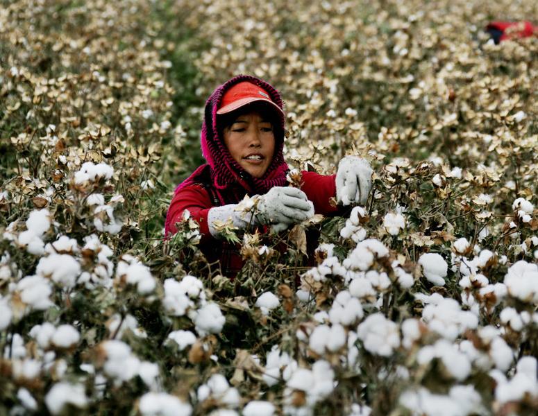 維護人權 美國考慮禁新疆棉製品進口