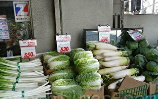 日本蔬菜贵 华人自有招