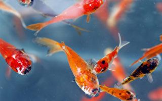 泡「魚溫泉」被魚吃治皮膚病!