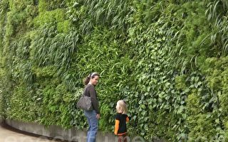 一位建築師的祕訣:為什麼您需要一堵植物牆