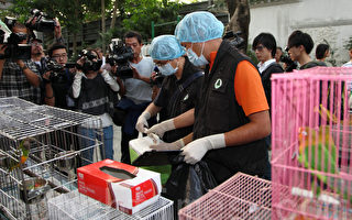 香港禽流感戒备升级 议员忧大陆隐瞒