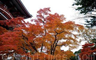 組圖:日本紅葉名勝——成田山