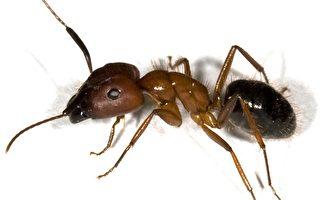 萬物皆有靈:監獄裡的螞蟻