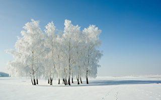 美丽的冬季