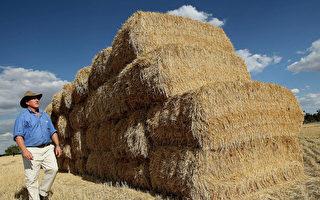 天災不斷 全球食物供應不足現象擴大