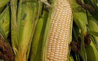 美去年农作物歉收 专家忧食品涨价
