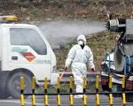 韩国畜禽疫情持续 社会危害突显