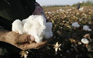"""中国""""囤棉风""""加剧全球棉市动荡"""