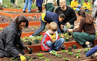 春到人间 美第一夫人率队白宫菜园开种