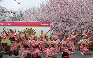 費城櫻花節 全家好去處