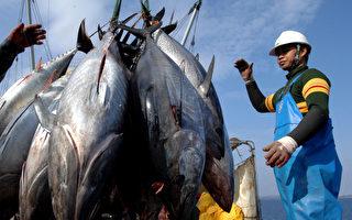 地中海40種魚類或滅絕 藍鰭金槍魚尤危險