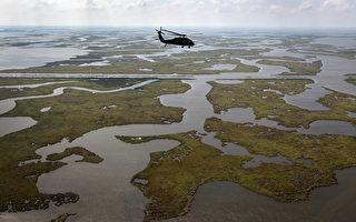 2011年4月19日,美国路易斯安那州中间地带,油污对沿岸海域及湿地的污染仍然十分严重。(John Moore/Getty Images)
