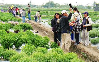 台東農改場香草戀 上千民眾聞香來