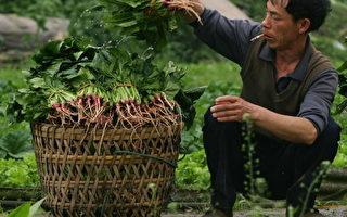 北京菠菜价格比上月上涨5倍 创11年新高