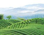 华夏茶文化根植台湾